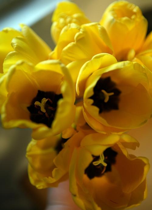 blog_flowers_4700