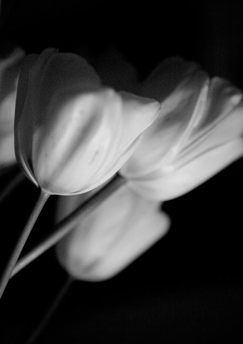 blog_flowers_4709bw