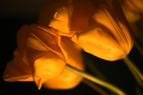 blog_flowers_4728
