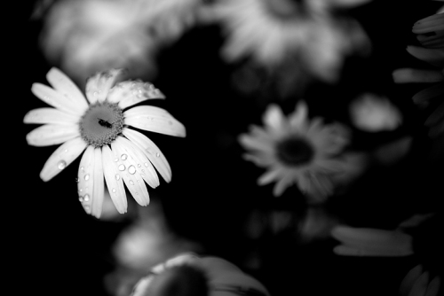 blog_Flowers_6114bw